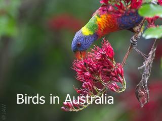 Birds from around Sydney