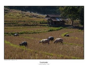 Laos_1600x1200-26